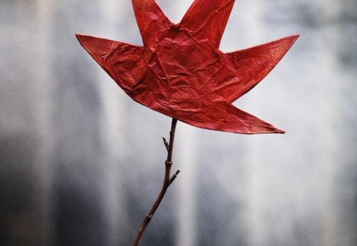 Porträtt på Det röda trädet - Affischbild, foto Per Eriksson