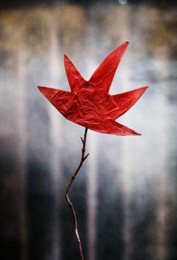 Teatermatiné: Inferno + Det röda trädet